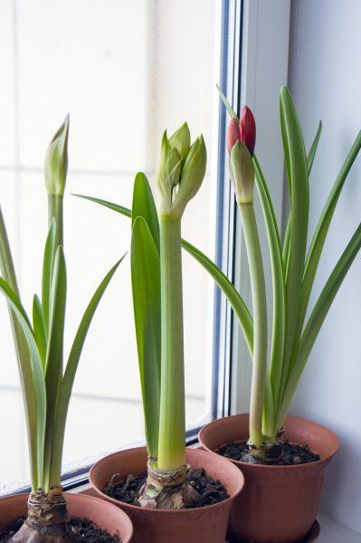 planten mee verhuizen. planten in vensterbank